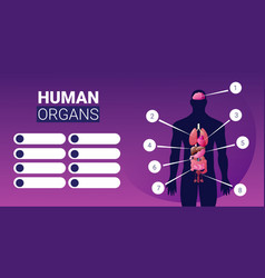 human body structure infographic poster with male vector image