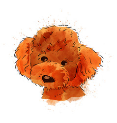 dog hand painted watercolor isolated vector image vector image