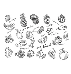 fruit stack sketch vector image