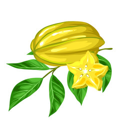 star fruit carambola isolated on white background vector image vector image
