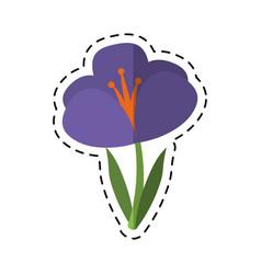 cartoon crocus plant spring floral icon vector image