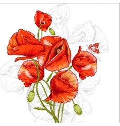 Bunch of Beautiful Red Poppy vector