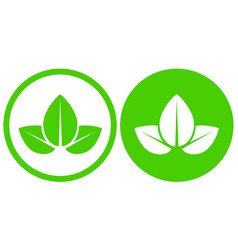 eco natural green plant leaves icon in frame vector image