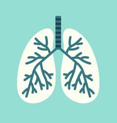 isolated lungs vector image