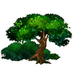 Large tree oak nature forest ecology concept vector
