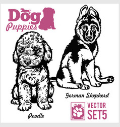 Poodle and german shepherd - dog puppies vector