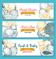 sketch banners of tropical exotic fruits vector image