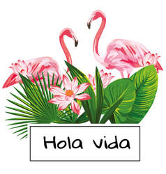 tropical composition hola vida slogan pink vector image