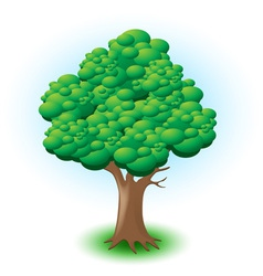 big tree vector image