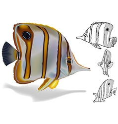 Copperband Butterflyfish Set vector image