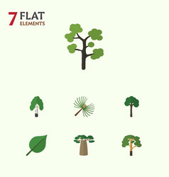 Flat icon ecology set of baobab linden garden vector