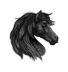 Black horse head profile portrait vector image vector image
