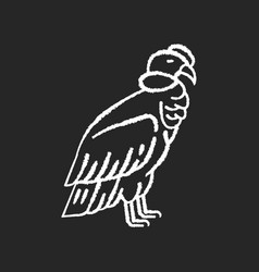 Condor chalk white icon on black background vector