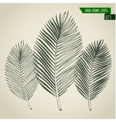 Set of hand drawn palm leaves vector image