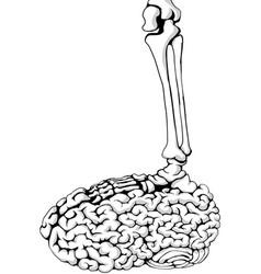 Skeleton brain step vector