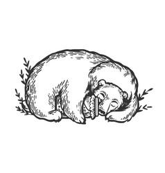 Sleeping bear engraving vector