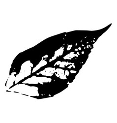 autumn leaf on a white background vector image