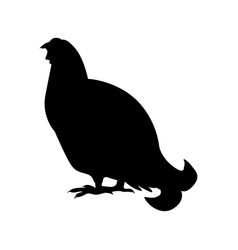 Capercaillie wood grouse silhouette vector