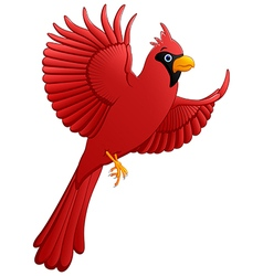 Flying cardinal cartoon vector