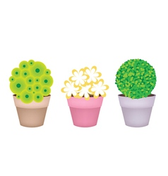 Trees and Plants in Terracotta Flower Pots vector