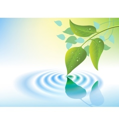water ripple and leaf vector image