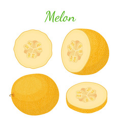 yellow ripe melon cartoon flat style vector image vector image