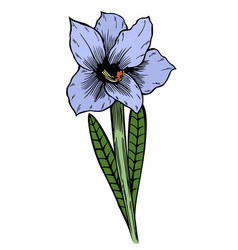 Blue lily flowers vector