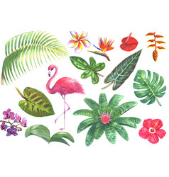exotic watercolor tropical set vector image