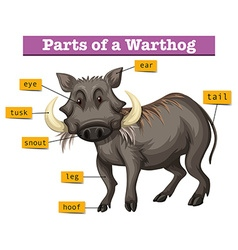 Diagram showing parts of warthong vector