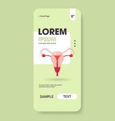 Female reproductive system uterus cervix ovaries vector