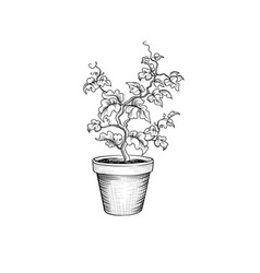 Floral pot decorative bonsai tree isolated plant vector
