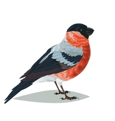 Realistic bird Bullfinch on a white background vector image vector image