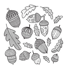 Acorns and oak leaves set in boho style vector
