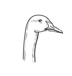 hand draw sketch goose vector image