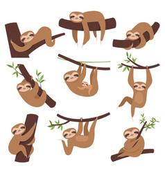 Sloth on branch cute little kid sleepy animal vector