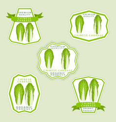 The theme cabbage vector