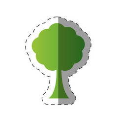 Tree environment natural flora vector