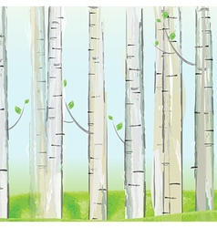 Aspen forest background vector image