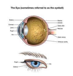 the eye vector image