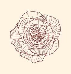 Detailed linear graphic art of rose flower vector