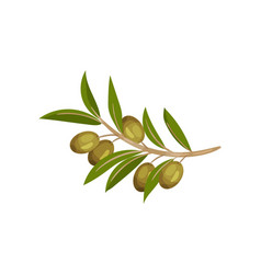 Image a branch a green olive branch vector