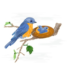 Birdie-and-little-birdsin the nest vector image