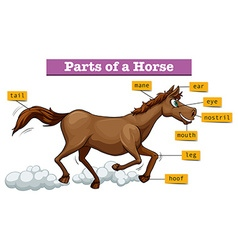 Diagram showing parts of horse vector