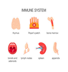 Immune system concept vector
