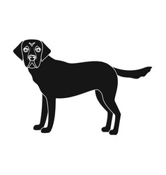 Mastiff single icon in black stylemastiff vector