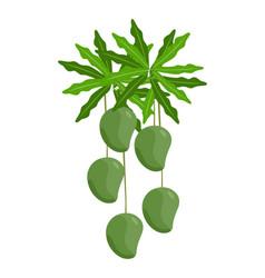 Ripe mango on tree vector
