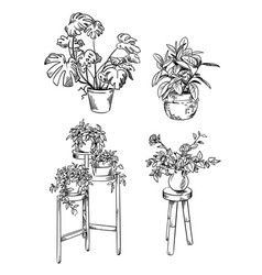 Set house plants in pots drawings vector
