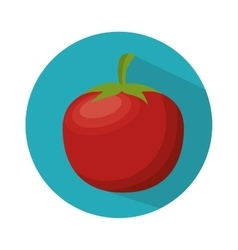 ripe tomato nutrition healthy food vector image