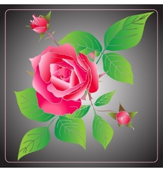 Stencil Roses vector image vector image