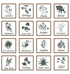 Collection ayurvedic herbs vector
